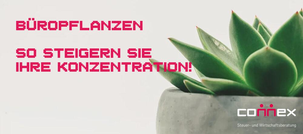 Büropflanzen, die Ihre Konzentration steigern