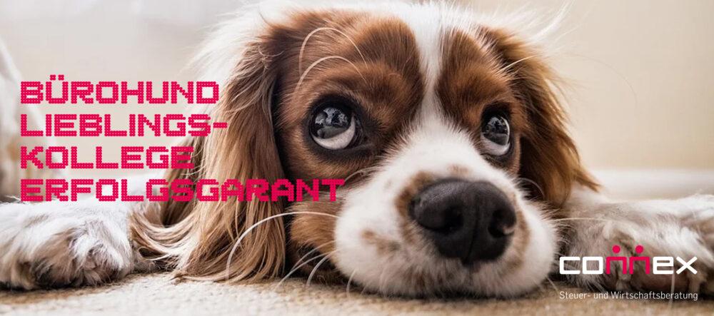 Bürohund – Garant für Büroharmonie und Arbeitsmoral?
